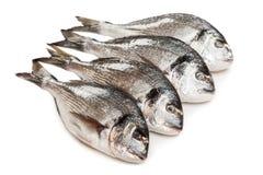 鱼食物镀金面题头 免版税库存照片