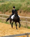 εκπαίδευση αλόγου σε περιστροφές Στοκ Φωτογραφίες