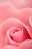 влюбленность романтичная подняла Стоковые Изображения