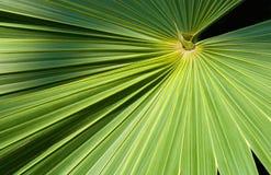 叶子棕榈树 免版税库存图片图片