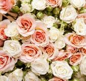 розы конструкции предпосылки флористические ваши Стоковая Фотография RF