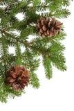 杉木锥体和针 免版税图库摄影