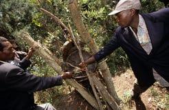 种田在乌干达的蜂 免版税图库摄影