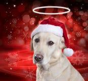 圣诞节天使狗 免版税库存照片