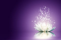 Цветок лотоса Стоковая Фотография