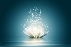 Цветок лотоса Стоковые Изображения
