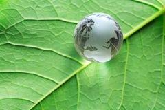 在绿色叶子的地球 免版税库存照片