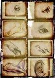 Людские части тела Стоковые Изображения