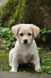 Маленькая собака Стоковое Изображение RF