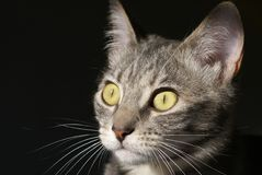 Καταδιώκοντας γάτα γατακιών Στοκ φωτογραφία με δικαίωμα ελεύθερης χρήσης