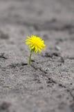 新芽通过沙子做方式 免版税库存图片