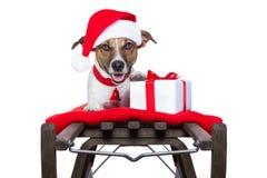 在雪橇的圣诞节狗 免版税图库摄影
