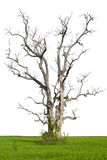 查出死亡结构树在米的。 库存照片
