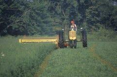 农夫剪切干草领域 免版税库存图片