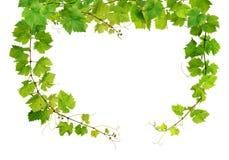 新葡萄树框架 免版税库存照片