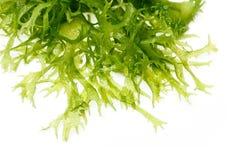 可食的海草沙拉 库存照片