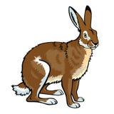 坐的野兔 免版税库存照片