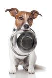 饥饿的狗食碗 免版税库存图片