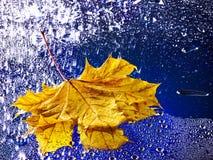 浮动在与雨的水的秋天叶子。 免版税库存照片