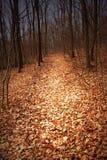 秋天森林路径 免版税库存照片