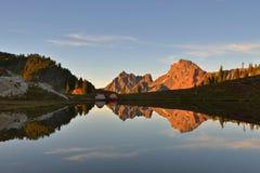 黄色翠菊小山和边界峰顶 免版税库存照片