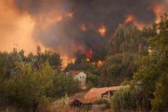 在房子附近的森林通配火 库存图片