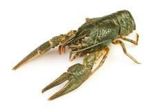 小龙虾运行一个 库存照片