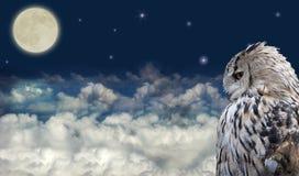在满月的猫头鹰 免版税库存图片