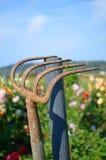 生锈的庭院犁耙 免版税图库摄影