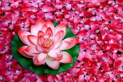 Цветок лотоса Стоковое Изображение RF