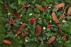 冬天植物群和动物区系 库存图片