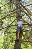在杉木结构树耕地上升的子项。 免版税库存照片