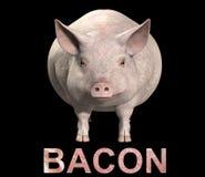 猪和烟肉   图库摄影