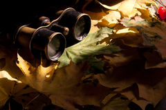 Старые бинокли. Стоковое фото RF