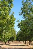 胡桃种植园 免版税库存图片