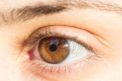 Глаз девушки карий Стоковые Изображения RF