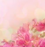 美好的抽象花卉背景 库存照片