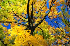 结构树冠 免版税库存照片
