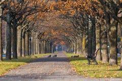 与鸭子的五颜六色的秋天公园风景 免版税图库摄影