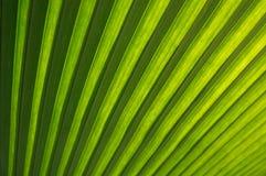 关闭热带绿色事假纹理 免版税库存照片