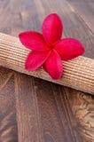 温泉和健康概念的热带羽毛 图库摄影