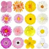 Выбор розового, померанцового, желтой и белизны Стоковые Фотографии RF