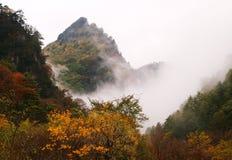 秋天雾森林,甘肃省,中国 免版税库存图片