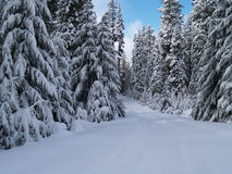 Снежок покрыл дорогу Стоковые Фотографии RF