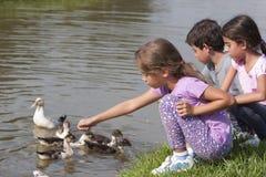 鸭子池塘的小女孩 免版税库存图片