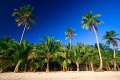掌上型计算机热带天堂的结构树 免版税库存照片