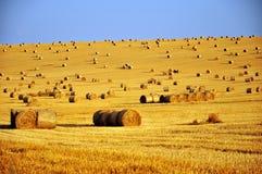 在收获以后的麦地 库存照片