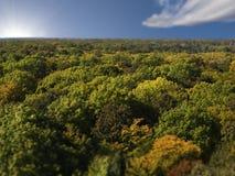 密集的森林顶上的视图  免版税库存照片