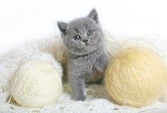 与羊毛球的英国小猫。 免版税图库摄影