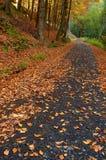 与结构树的森林路径 免版税库存照片